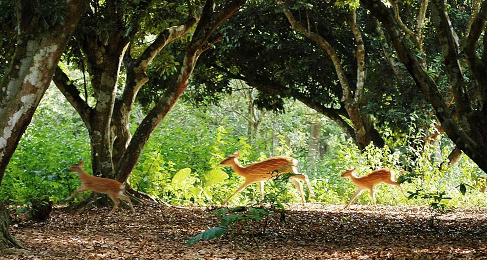 Du lịch trong nước - Vườn quốc gia Cúc Phương
