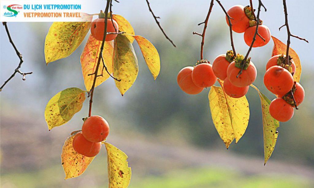 Những món ăn mang hơi thở mùa thu Hà Nội