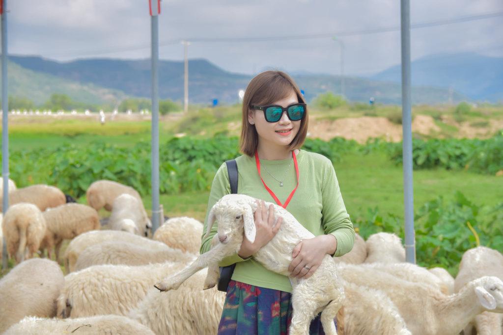 Khám phá thảo nguyên thu nhỏ tại đồng cừu Suối Tiên Ninh Thuận